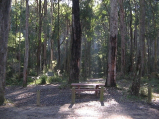Lyrebird Forest Walk delights and captures all visitors...