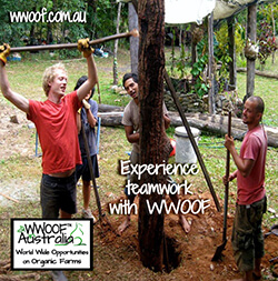 Experience teamwork with WWOOF - World Wide opportunities on Organic Farms